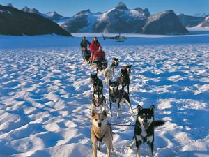 Alaska_dog_sled-lg